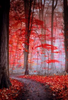 ♂ Amazing nature red forest Crimson decor, following the grey path |...