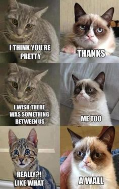 grumpycats in love...or you know ...not #adorable #grumpycat #funny