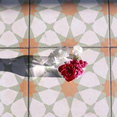 Flowers, tiles, morning light.