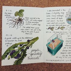 New blog post online. Link in profile. Sowed the first seeds of the year today. Feels great to be under way on another allotment year with all the ups and downs and twists and turns to make the journey interesting. #allotment #journal #illustratedjournal #gardenjournal #allotmentjournal