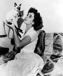 Siamese Cats - Elizabeth Taylor and her cat