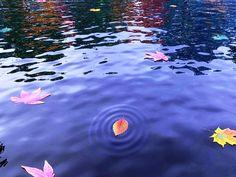 """""""L'Onda X""""è il termine dato dal dottor Simon Atkins alla grande ondata di frequenze elettromagnetiche che dovrebbe arrivare sul pianeta alla fine di settembre di quest'anno.. .~*~.❃∘❃✤ॐ ♥..⭐.. ▾ ๑♡ஜ ℓv ஜ ᘡlvᘡ༺✿ ☾♡·✳︎· ♥ ♫ La-la-la Bonne vie ♪ ❥•*`*•❥ ♥❀ ♢❃∘❃♦ ♡ ❊ ** Have a Nice Day! ** ❊ ღ‿ ❀♥❃∘❃ ~ Tu 29th Dec 2015 ... ~ ❤♡༻"""