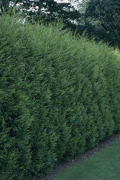 87 Best Screening Plantings Images Landscaping Doors Fence