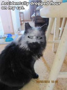 37 Absolutely Hilarious Animal Pictures
