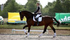 Katrin Winter Pferdesportdienstleistungen - Der Weg zu Losgelassenheit & Eleganz. Ausbildung und Beritt von Dressurpferden von Klasse A-S.