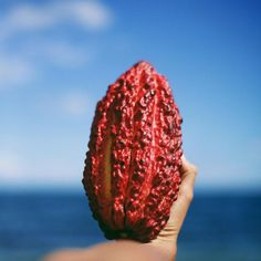 Very Helpful Cacao Techniques For raw cacao balls