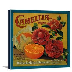 Camellia Orange - Vintage Label