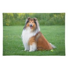 Rough Collie dog beautiful photo placemat Rough Collie, Collie Dog, My Dreams In Life, Kitchen Photos, Beautiful Dogs, Placemat, Vibrant Colors, Corgi, Artwork