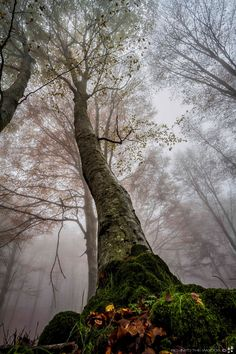 Old Master of the Forest -- by Rocco Calogero on 500px