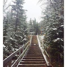 【__alicebaby__】さんのInstagramをピンしています。 《🌲❄️🌲❄️🌲 …クリ…スマス? Where is Santa Claus…🎅🏼 #出勤時の衝撃 #snow #forest #view #nature #wildlife #outdoor #adventure #canada #canadalife #banff #banfflife #nationalpark #workingholiday #雪 #森 #自然 #景色 #アウトドア #カナダ #カナダライフ #バンフ #バンフライフ #ワーキングホリデー #ワーホリカナダ #海外 #海外生活》