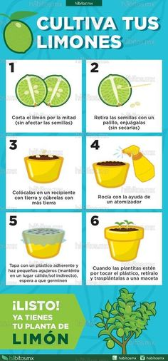 Houseplants That Filter the Air We Breathe Hbitos Health Coaching Cultiva Tus Limones Eco Garden, Green Garden, Edible Garden, Garden Plants, House Plants, Water Garden, Growing Plants, Plant Care, Permaculture