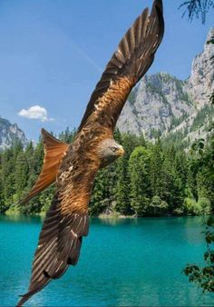 Eagle soaring through God's  Majestic creation of heavenly beauty.