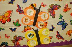 Farfallina & Marcel : Butterfly Life Cycle