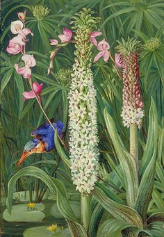 Water-Loving Plants and Kingfisher near Grahamstown Marianne North - circa 1882 Vintage Botanical Prints, Botanical Drawings, Botanical Art, Nature Illustration, Botanical Illustration, Beautiful Paintings Of Flowers, Flower Paintings, Marianne North, Gravure