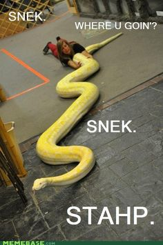 Snek is love. Snek is life. Cute Funny Animals, Funny Cute, The Funny, Hilarious, Humorous Animals, Zoo Animals, Wild Animals, Danger Noodle, Cute Reptiles
