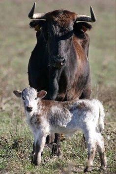 Vaca y becerro