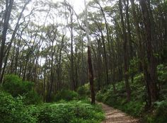 A circuit bushwalk through Cleland Conservation Park, through stringybark forest, some steep climbs with gentler sections. Hike past Keirs Ruin, an old farm house abandoned in the Old Farm Houses, Conservation, Climbing, Abandoned, Past, Trail, Hiking, Country Roads, Places