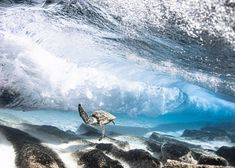 HAWAI'I Magazine's 2021 Photo Contest Winners - Hawaii Magazine Perfectly Timed Photos, My Magazine, Ocean Life, Photo Contest, Underwater, Cool Pictures, Wildlife, Waves, Sunset
