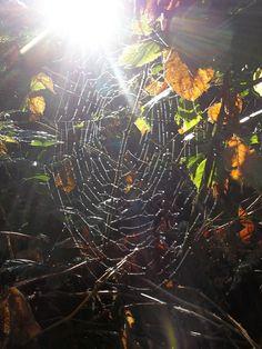 Sun spun ;D | Flickr - Photo Sharing!