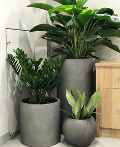 Indoor plants and cement planters are perfection! Indoor plants and cement planters are perfection! House Plants Decor, Patio Plants, Plant Decor, Indoor Plants, Hanging Plants, Balcony Plants, Plants For Home, Fake Plants, Indoor Gardening
