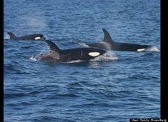 10 Best Whale Watching Destinations Around The World (PHOTOS, VIDEO)