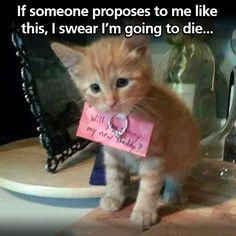 Too cute for words... (How To Get Him To Propose Boyfriends)