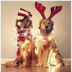 Old Dog Haven Holiday Fund Drive - Hello Friends, WELCOME to my Old Dog Haven Holiday Donation page! This is the time of year when we go out of our way to bring joy into each other's lives. We buy gifts, share our homes, and enjoy the company of others.