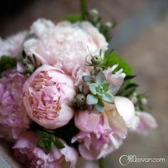 #Pink peony bouquet (Wisteria Lane)