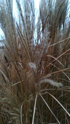 Grain in autmn