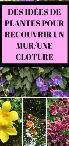 12 Plantes Grimpantes Pour Agrementer Pour Jardin Plante