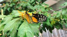 Beautiful# butterfly