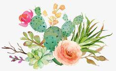 Fleshy cactus flowers PNG and Clipart Cactus Vert, Green Cactus, Cactus Flower, Watercolor Succulents, Watercolor Cactus, Watercolor Print, Image Cactus, Cactus Images, Watercolor Painting Techniques
