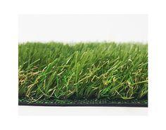 Bargain Grass SYCAMORE