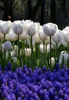 Beautiful Bouquet Of Flowers, Flowers Nature, Fresh Flowers, Spring Flowers, Beautiful Flowers, Tulips Garden, Daffodils, Arrangements Ikebana, Flower Farm