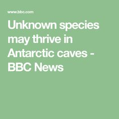 Unknown species may thrive in Antarctic caves - BBC News