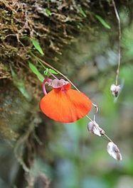 Mount Roraima - Wikipedia, the free encyclopedia