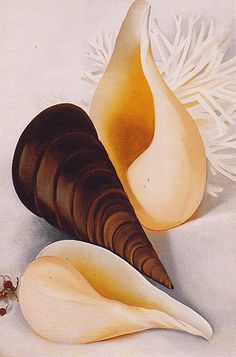 Two White Shells One Black Shell 1937 - Georgia O'Keeffe reproduction oil painting Alfred Stieglitz, Georgia O'keeffe, Savannah Georgia, Georgia O Keeffe Paintings, Munier, New York Art, Oil Painting Reproductions, Grant Wood, Natural Forms