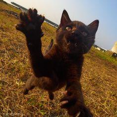 """アクセントさんのツイート: """"お待たせしました これが猫の最強流派「黒猫拳」です 全国の黒猫ファンの皆様、お納めください…"""