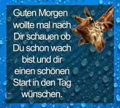 Good morning, wanted to check and see if you are awake already and also wish you a beautiful start of the day. Goedemorgen, wilde kijken of je al wakker was en wens je ook een mooie start van de dag. Good Night, Good Morning, German Quotes, Happy Thoughts, Carpe Diem, Daily Quotes, Friends, Check, Travel