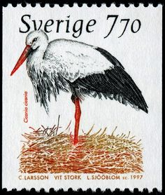 photo SjooblomSweden2209WhiteStork-1-2-97-CLarsson.jpg