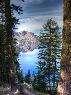 The lake makes a great backdrop for the many trees that adorn trails at Crater Lake National Park.