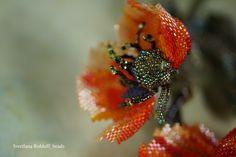 Оранжевый мак. Мастрекласс в ПДФ Orange Poppy, Peyote Beading, Diy Kits, Poppies, Seeds, Photo And Video, Flowers, Florals, Peyote Stitch