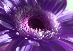 Purple Flower in Natural Light