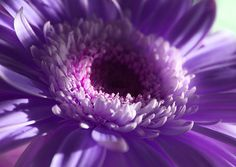 27 Bright and Colourful Macro Flower Photographs