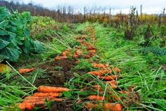 hashtag on TwIn line with Tory DWP policy will be commencing work picking carrots in Kings Lynn to pay for his benefits itter Garden Design, Vineyard, Home And Garden, Outdoor, Gardening, Advent, Garden Ideas, Google, Garden
