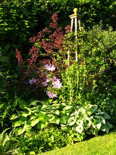 Clematis and hostas