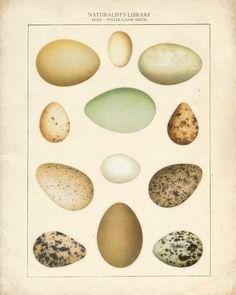 Game Bird Eggs Art Print