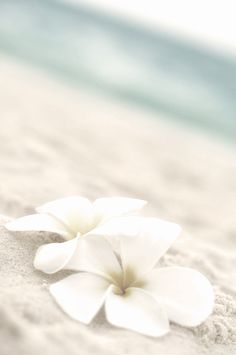 #summer #beach #ocean #fleurs #beige #grey #white