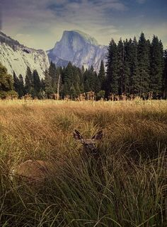 theroamer:  Wandering the meadow with a local tour guide.