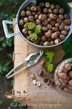 The hazelnuts harvest time.... by Laura Adani, via Flickr